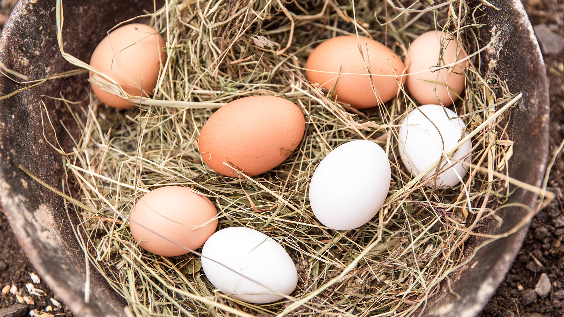 Eggs in a nest in detail
