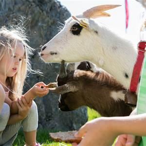 Junge und Mädchen füttern eine Ziege