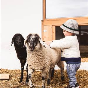 Child caresses sheep in a petting zoo