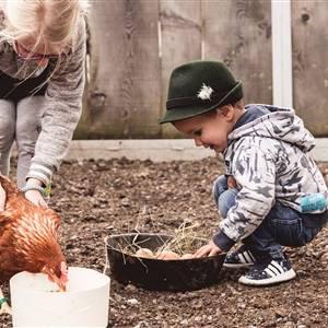 Kinder füttern Hühner und holen Eier aus einer Schüssel