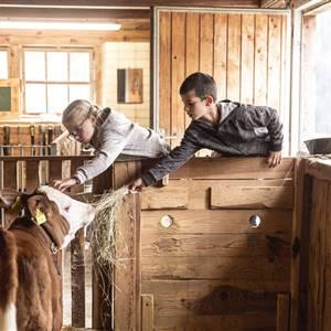 Kinder füttern Kuh