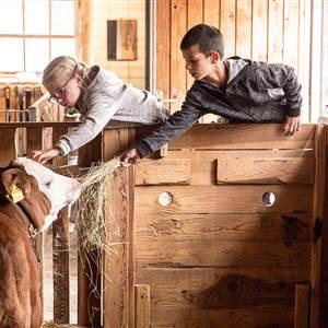 Kinder füttern eine Kuh im Stall